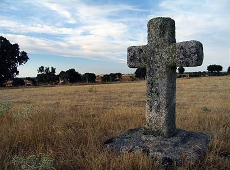 Cruz de la Salve, Salce