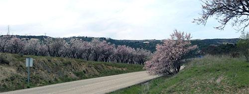 almendrosenflower_carretera