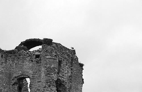 Cigüeñas en la Torre del Homenaje del Castillo de Asmesnal