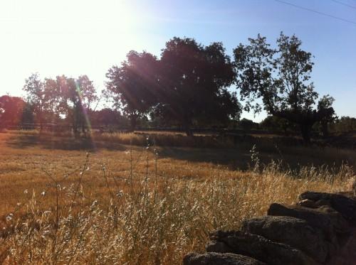 Tierra cosechada en Pasariegos
