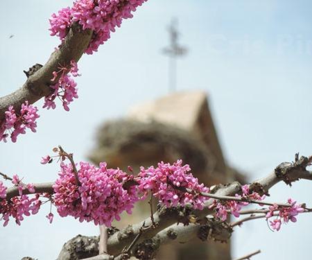 Flores y al fondo la espadaña de la iglesia de Almeida