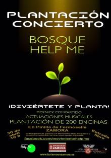 plantacion-concierto-bosque-help-me-jesus-yanes-zamora