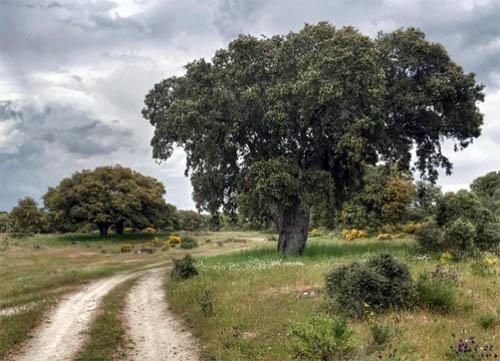lacernecina_monte_encinasygranito