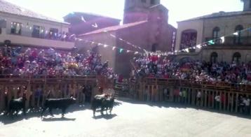 Los cabestros entran a chiqueros @lasarribestaurinas