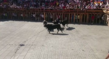 Los novillos quedan solos en la plaza @lasarribestaurinas