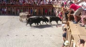 Un novillo lanza un derrote contra la talanquera @lasarribestaurinas