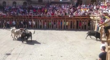 La manada se aproxima a chiqueros @lasarribestaurinas