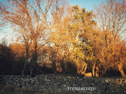 Paisaje de Zafara en Otoño - Foto de ArenaSayago