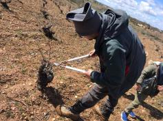 Podando viñas en Arribes / Fuente: Hato y Garabato