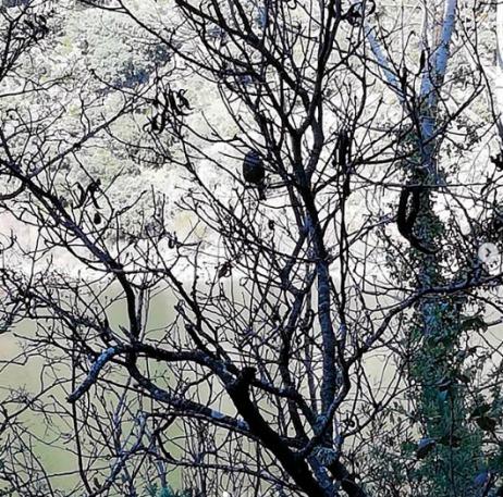 Pájaro sobre árbol en la rivera