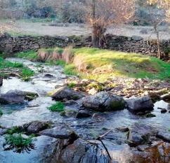 La rivera lleva poco caudal / Foto: MP