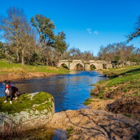puente albañeza arcillo de sayago