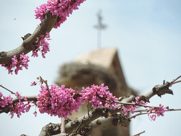 flores sobre árbol frente a la iglesia de almeida de sayago
