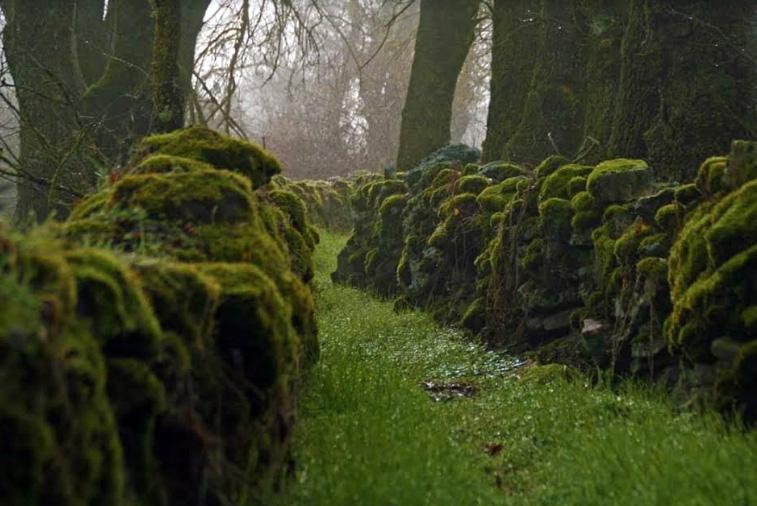musgo sobre cortinas de piedra y mucha niebla en el pueblo de villamor de la ladre en zamora
