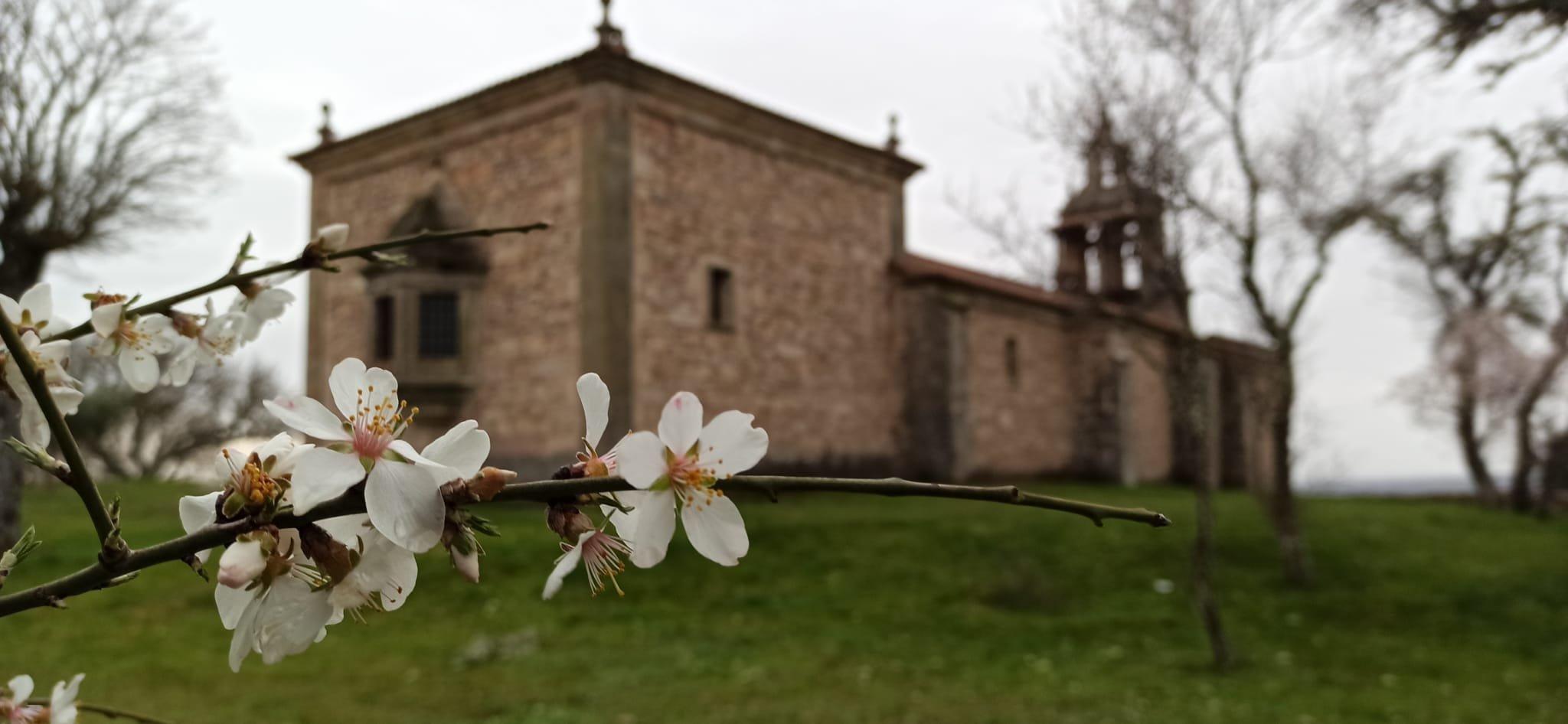 almendros en flor en la ermita de la virgen del castillo de fariza zamora