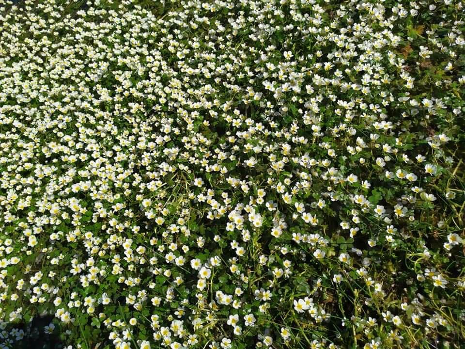 campo plagado de flores en la rivera de Villar del Buey, comarca de Sayago, provincia de Zamora